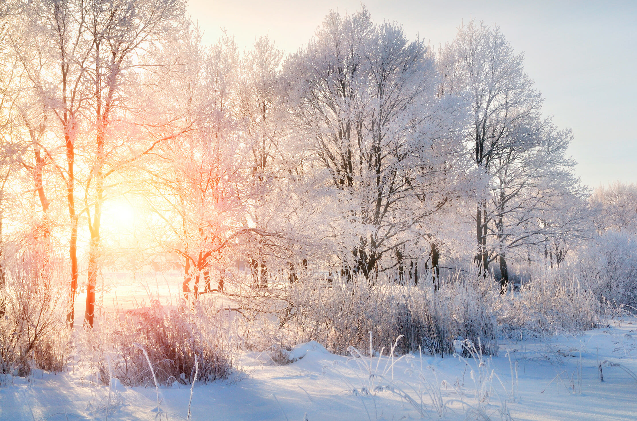 The Winter of Our Contentment