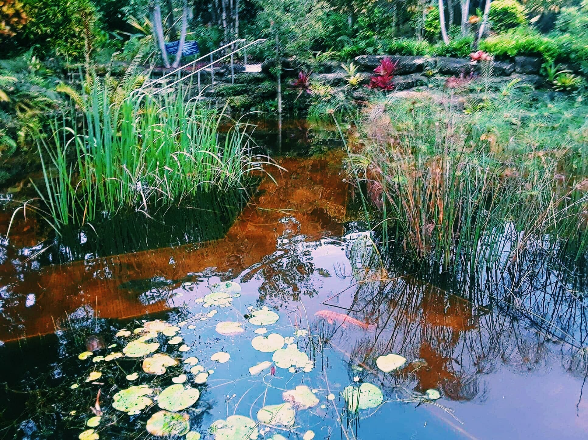 Mounts Botanical Garden of Palm Beach County Says 'I Do' to Local Wedding Planners Seeking Lush & Luscious Outdoor Settings