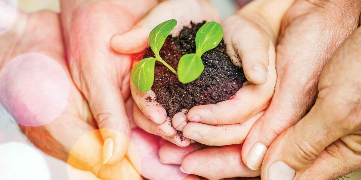 Pure green plant with soil in human hands on background